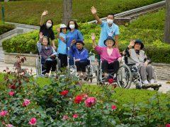 バラ見物(秋留台公園)