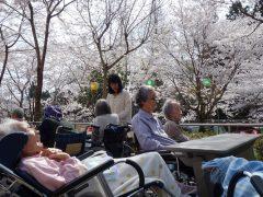 お庭での観桜会