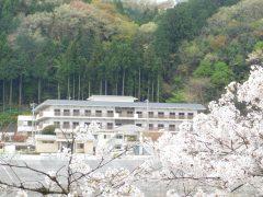 対岸からの桜と第二紫水園