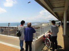 江の島や山梨と遠出しますよ!
